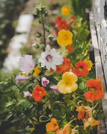 a small flower garden for beginners filled with small orange and white blooms by capturing wonderland